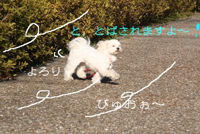 20080225180101.jpg