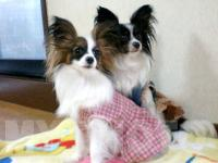 エリィー&ライヤ