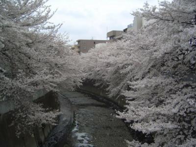 060402早稲田さくらまつり(2)