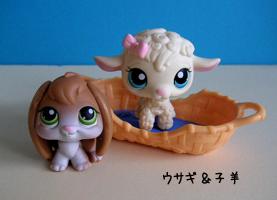 ウサギ&子羊