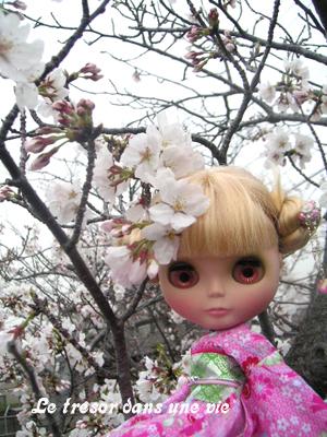 桜持って帰りたい(だめだめ)