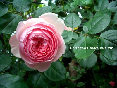 きれいだねぇ。花って。