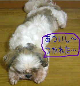 20060910150437.jpg