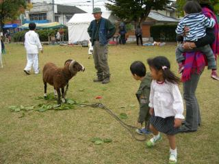 Playing with a sheep is fun but...fearful...