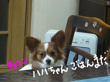 choko1.jpg