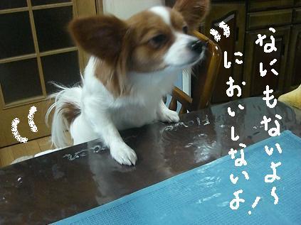 choko2.jpg