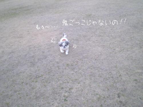 217_4.jpg