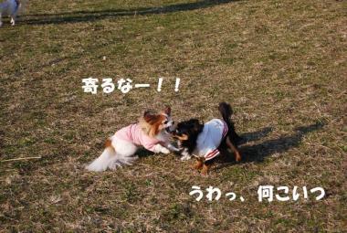 DSC_0740 ブログ