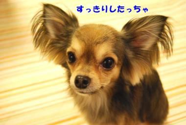 DSC_9195 ブログ