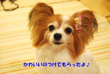 DSC_9189 ブログ