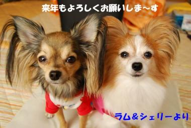 DSC_9123 ブログ