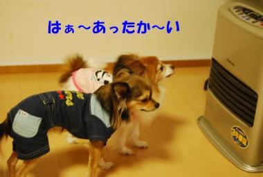 DSC_9049 ブログ