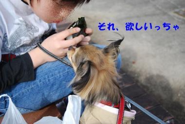 DSC_0903 ブログ