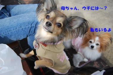 DSC_0910 ブログ