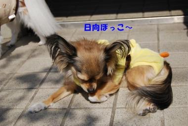 DSC_0979 ブログ