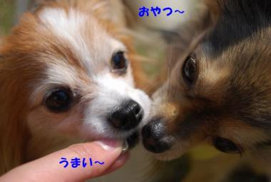 DSC_1019 ブログ