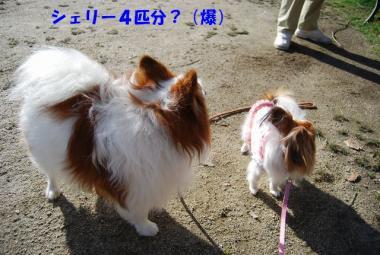 DSC_1081 ブログ