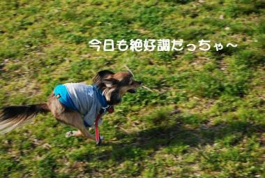 DSC_1574 ブログ