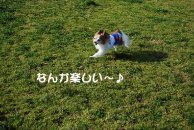 DSC_1605 ブログ