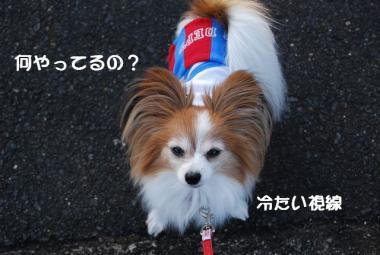 DSC_1628 ブログ