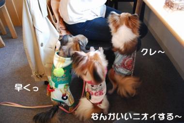 DSC_1230 ブログ