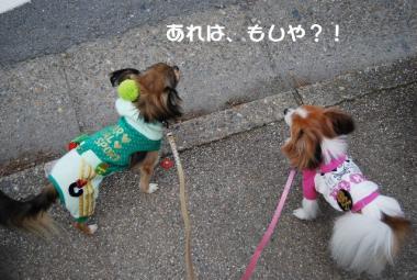 DSC_1278 ブログ
