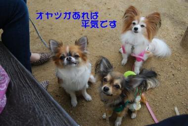 DSC_1306 ブログ