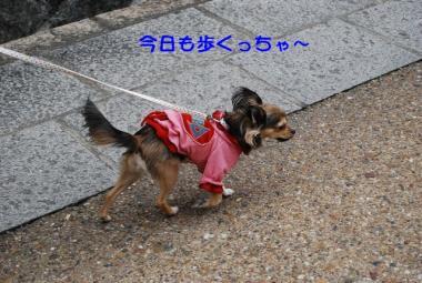 DSC_1635 ブログ