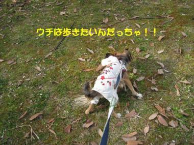 IMG_1641 ブログ