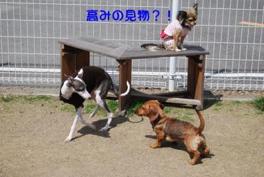 DSC_2357 ブログ