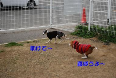 DSC_2393 ブログ