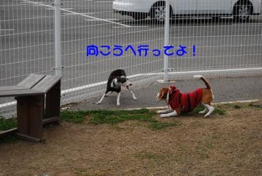 DSC_2395 ブログ
