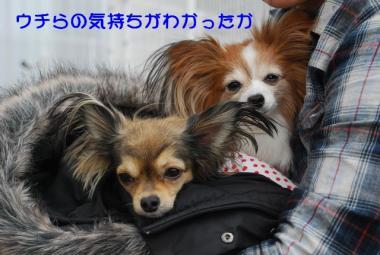 DSC_2396 ブログ