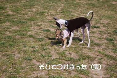 DSC_2425 ブログ
