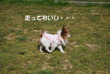 DSC_2437 ブログ