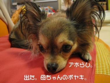IMG_1677 ブログ