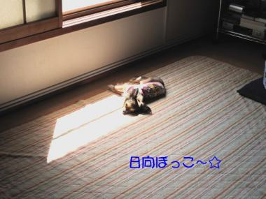 IMG_1703 ブログ