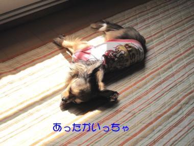 IMG_1706 ブログ