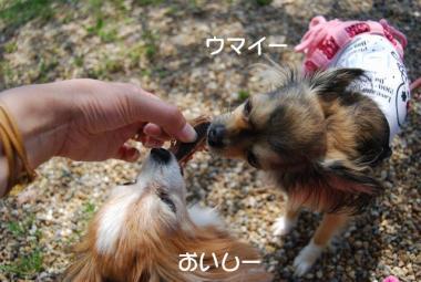 DSC_2682 ブログ