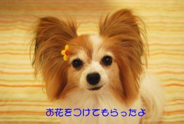 DSC_3095 ブログ
