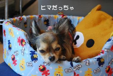 DSC_3411 ブログ
