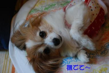 DSC_3422 ブログ