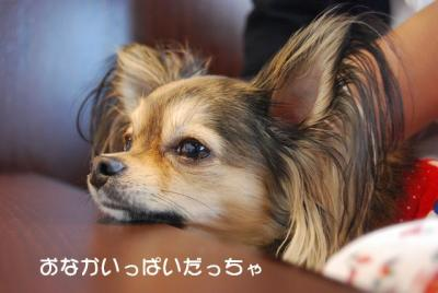 DSC_3524 ブログ