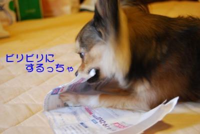 DSC_3612 ブログ