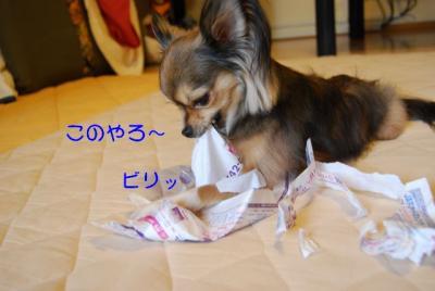 DSC_3674 ブログ