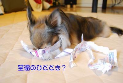 DSC_3661 ブログ