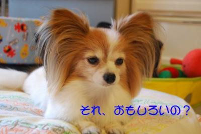 DSC_3633 ブログ