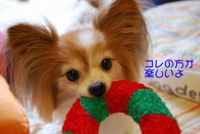 DSC_3681 ブログ ブログ