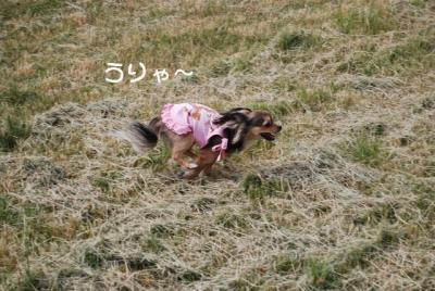 DSC_3714 ブログ