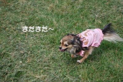 DSC_3718 ブログ